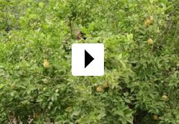 Vom Gießen des Zitronenbaums